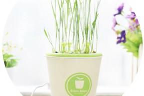 Ceramics anion potted plant aroma diffuser